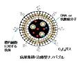 病巣集積・治療型ナノバブル模式図
