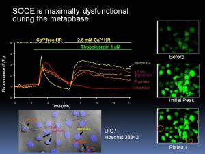 細胞生物学分野