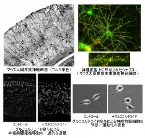神経科学研究部門